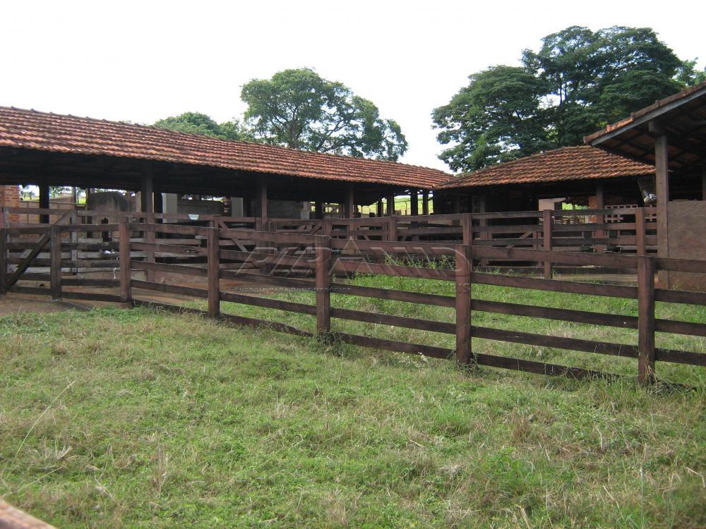 Comprar Rural / Sítio em Jardinópolis apenas R$ 9.900.000,00 - Foto 16