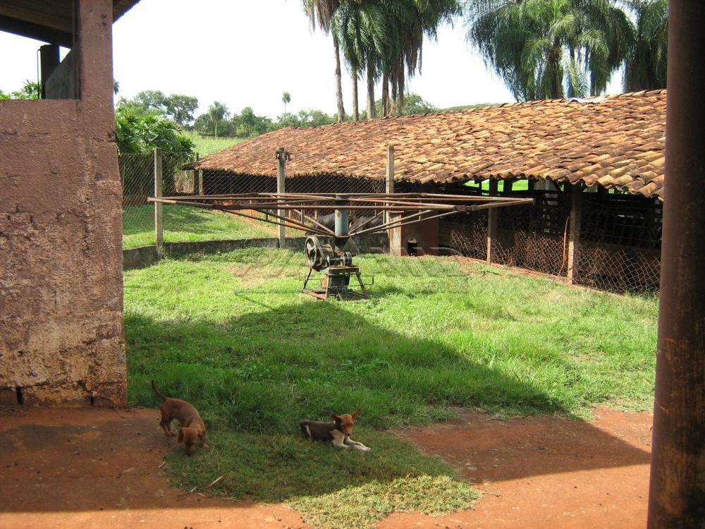 Comprar Rural / Sítio em Jardinópolis apenas R$ 9.900.000,00 - Foto 22