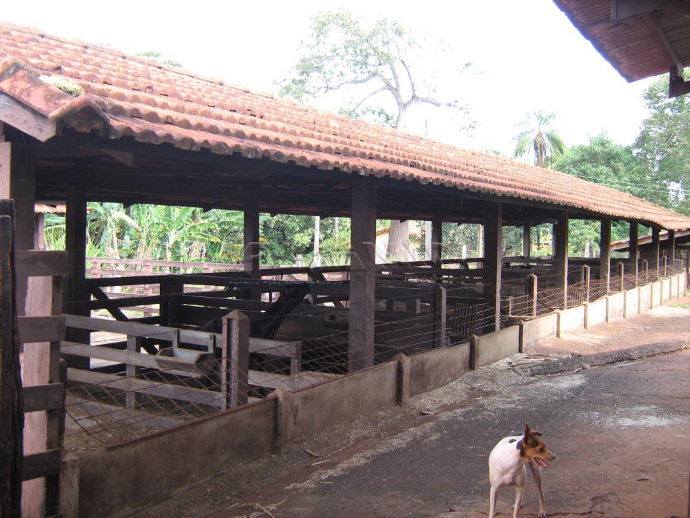 Comprar Rural / Sítio em Jardinópolis apenas R$ 9.900.000,00 - Foto 24