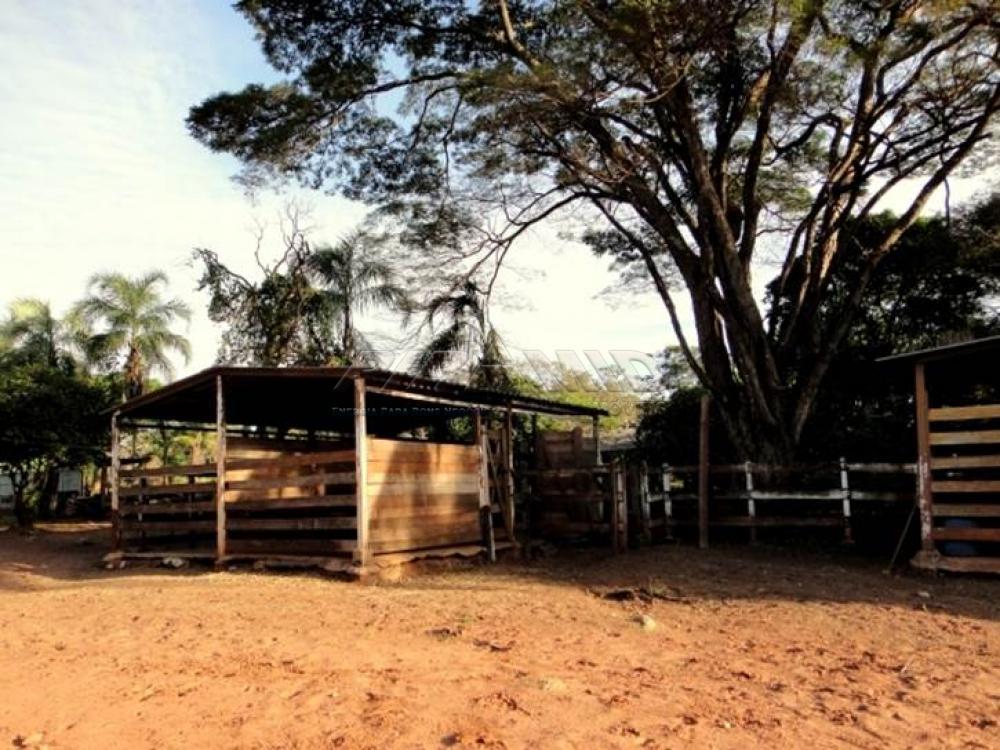 Comprar Rural / Chácara em Ribeirão Preto apenas R$ 850.000,00 - Foto 17