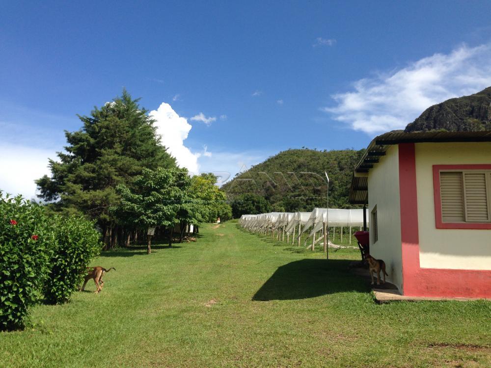 Comprar Rural / Fazenda em São João Batista do Glória apenas R$ 3.500.000,00 - Foto 10