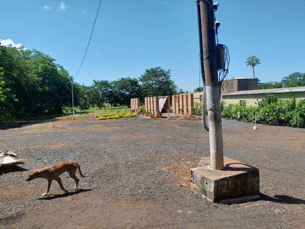 Comprar Rural / Chácara em Jardinópolis R$ 2.700.000,00 - Foto 13