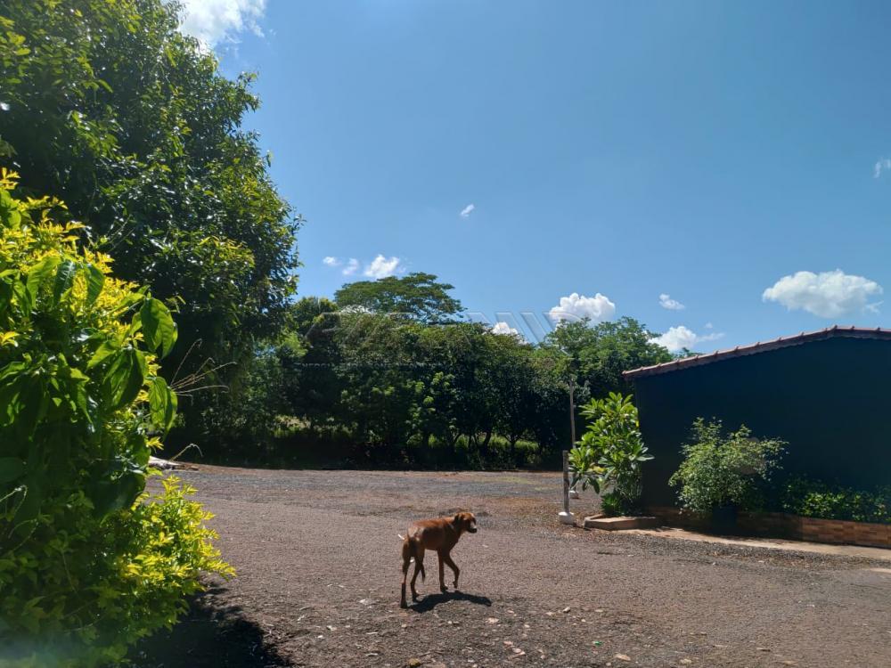 Comprar Rural / Chácara em Jardinópolis R$ 2.700.000,00 - Foto 18