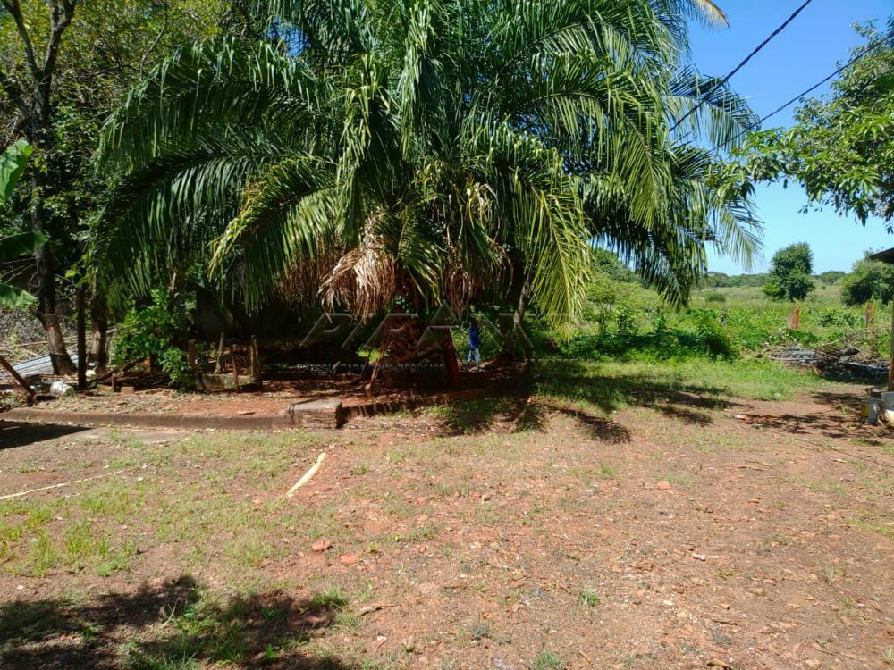 Comprar Rural / Chácara em Jardinópolis R$ 2.700.000,00 - Foto 40