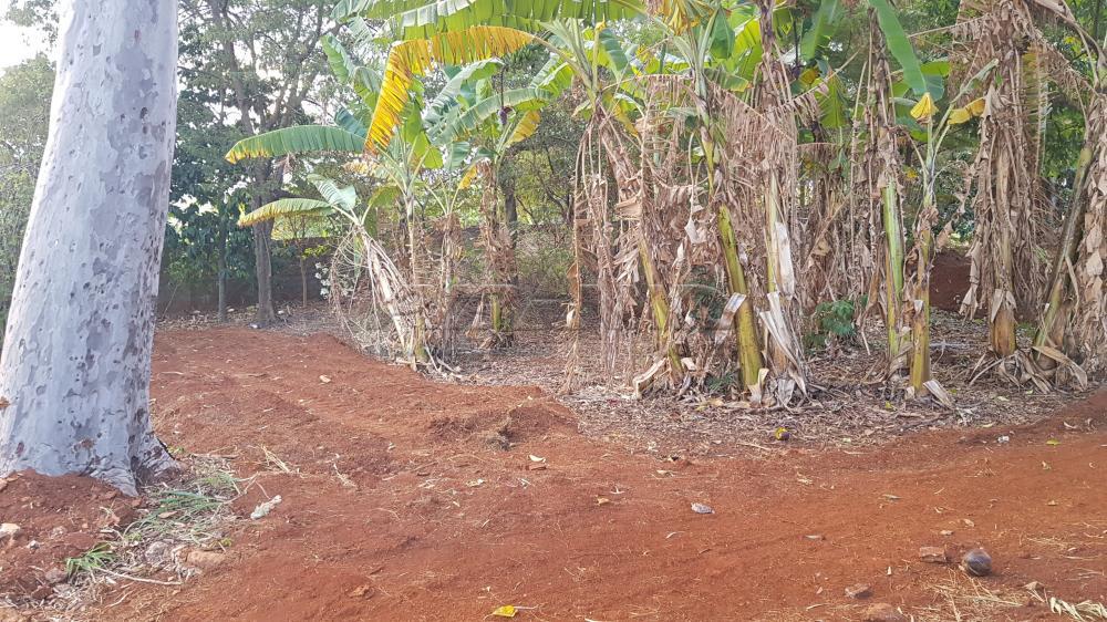 Alugar Terreno / Terreno em Ribeirão Preto apenas R$ 6.000,00 - Foto 5