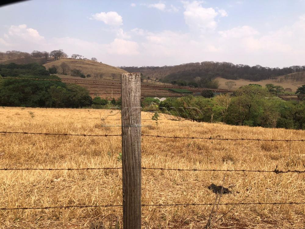 Comprar Rural / Sítio em Jardinópolis R$ 1.600.000,00 - Foto 4