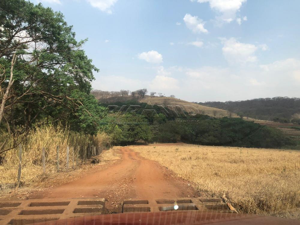 Comprar Rural / Sítio em Jardinópolis R$ 1.600.000,00 - Foto 6
