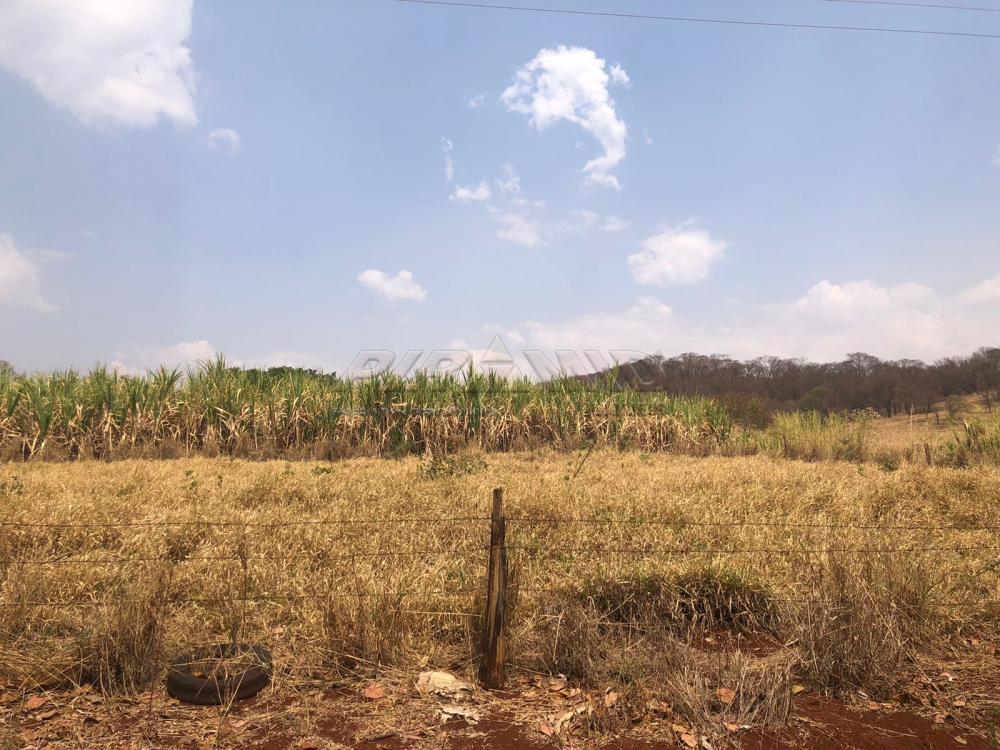 Comprar Rural / Sítio em Jardinópolis R$ 1.600.000,00 - Foto 11