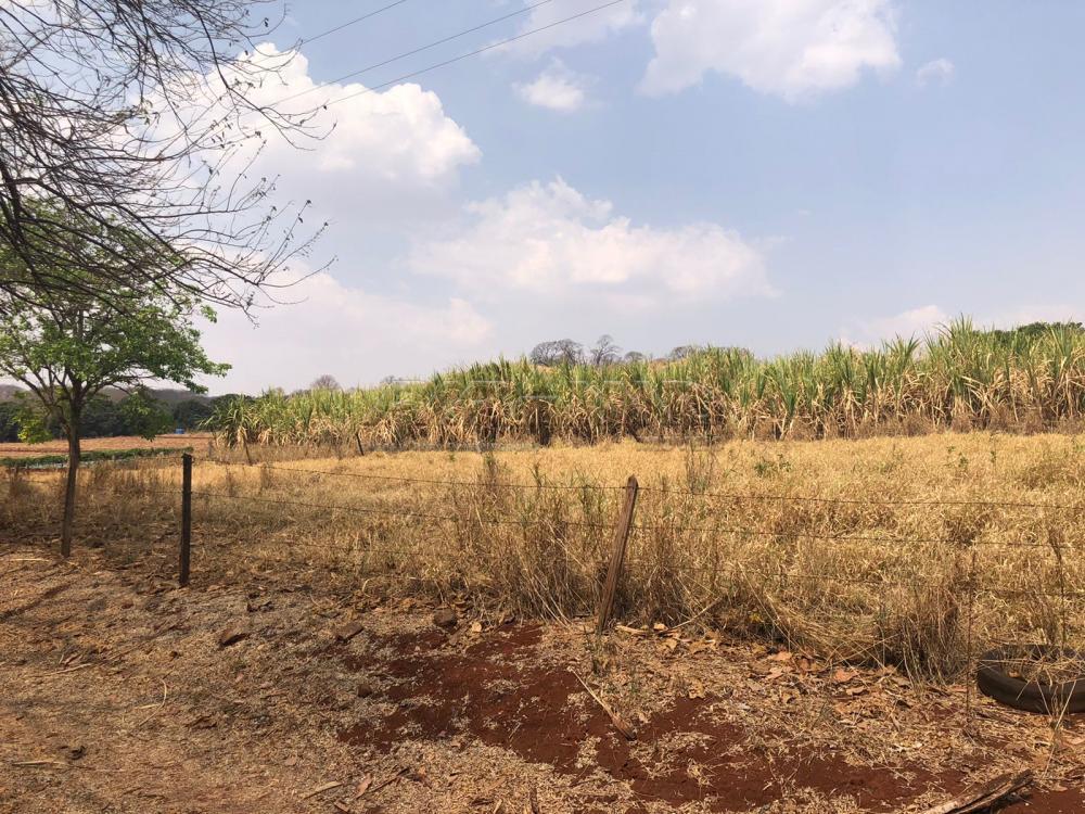Comprar Rural / Sítio em Jardinópolis R$ 1.600.000,00 - Foto 12