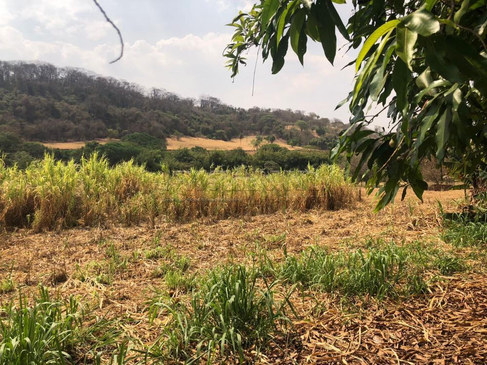 Comprar Rural / Sítio em Jardinópolis R$ 1.600.000,00 - Foto 18