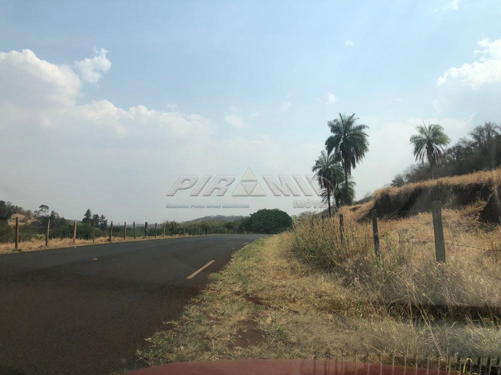 Comprar Rural / Sítio em Jardinópolis R$ 1.600.000,00 - Foto 28