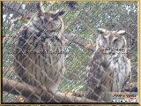 Bosque Municipal Fábio Barreto - Zoológico. - Fonte: