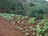 Jardinopolis Centro Area Venda R$3.000.000,00  Area do terreno 27316.00m2