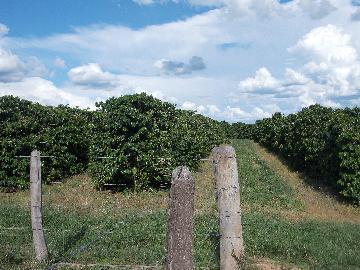Alugar Rural / Sítio em São Sebastião do Paraíso. apenas R$ 750.000,00