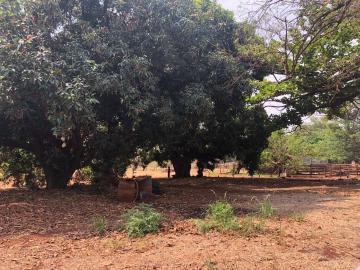 Comprar Rural / Sítio em Jardinópolis R$ 1.600.000,00 - Foto 7