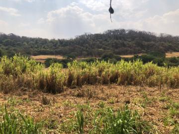 Comprar Rural / Sítio em Jardinópolis R$ 1.600.000,00 - Foto 19