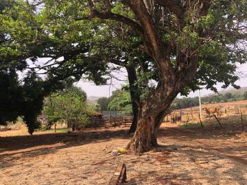 Comprar Rural / Sítio em Jardinópolis R$ 1.600.000,00 - Foto 21